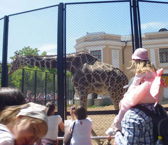 Смотрят жирафа.